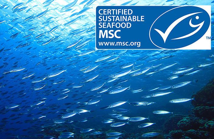 ¿Qué Es La Certificación MSC?.